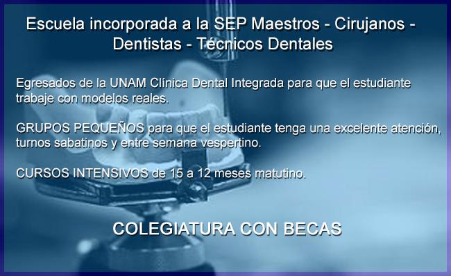 TECNICOS dentales PROTESIS dental PROTESIS removible Coronas de porcelana Protesista